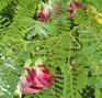 hummingbird-leaves